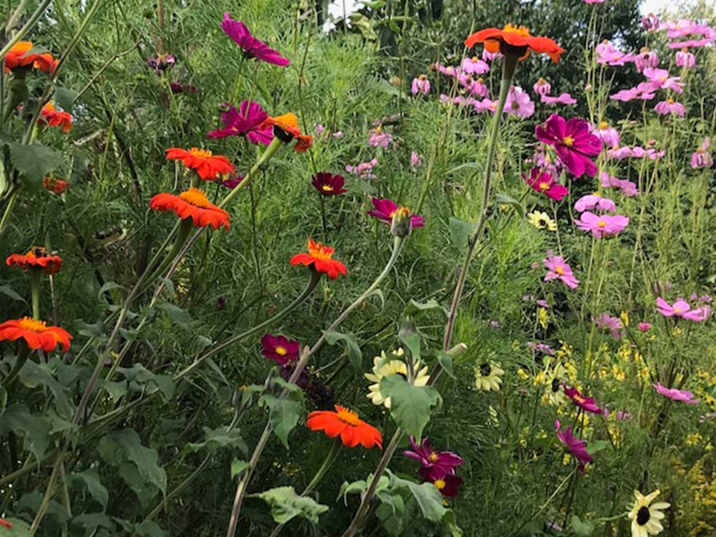 Garden at Charleston